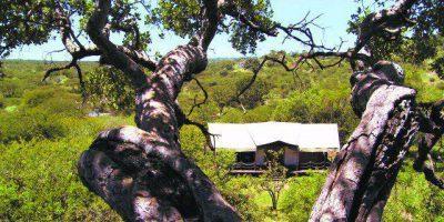 Serengeti Migration Camp Bedroom